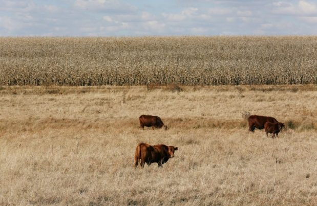 Is expropriation without compensation debate weighing on investment in SA agriculture?