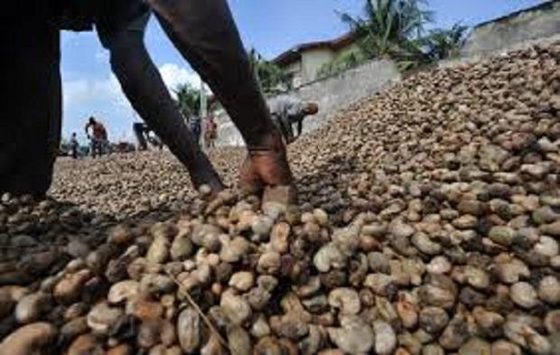 Tanzanian cashew farmers pocket approximately US $2.2Bn