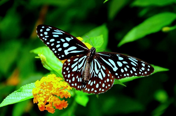 Butterfly farming in Kenya