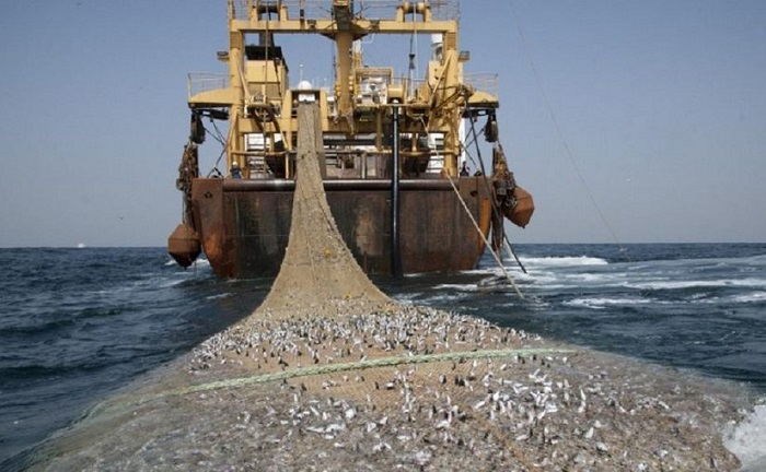 Illegal fishing costs Mozambican economy US $60m annually