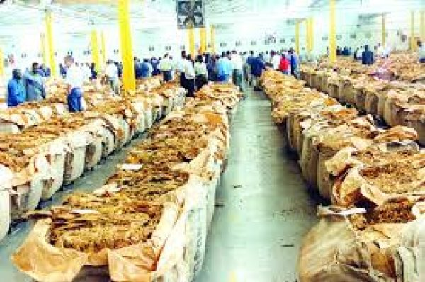 Zimbabwe's tobacco export earnings close 2018 at US $892m