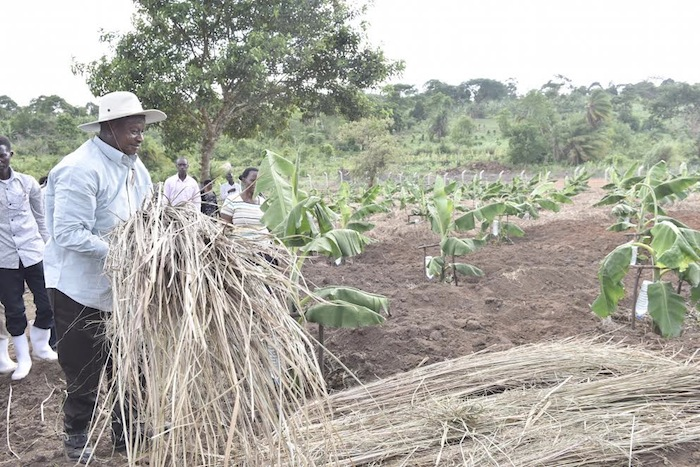 UK invests US $156m in Uganda's agriculture sector