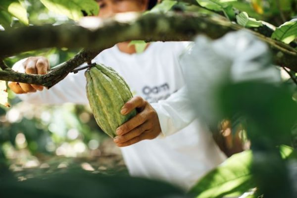 Innovation and creativity is the driving force behind Olam Cocoa