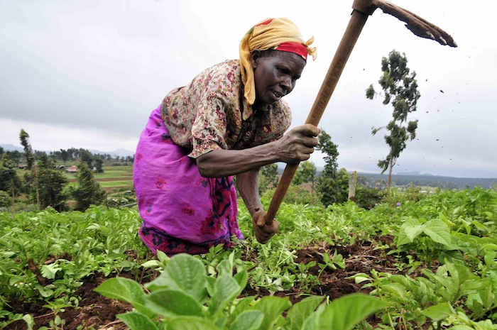 Kenyan Smallholder farmers to benefit from US $56m financing scheme from EU