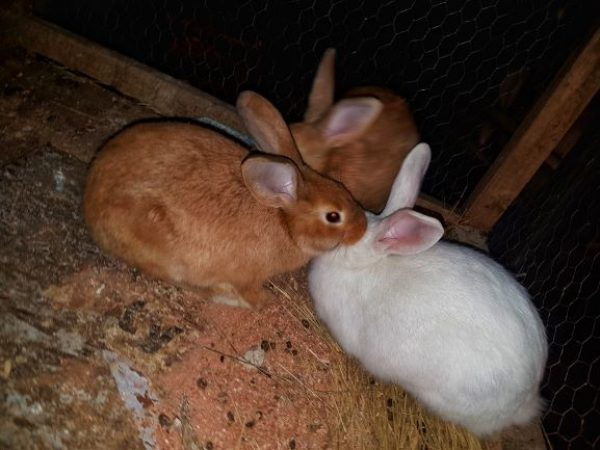 Rabbit farming is a developing viable business
