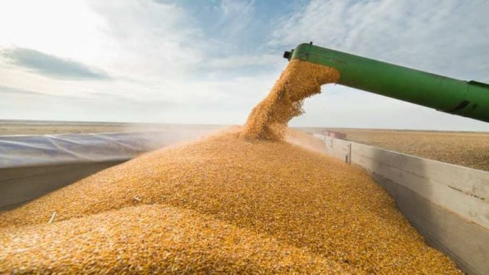 Maize estimates breach 11m tons – boosting supply outlook