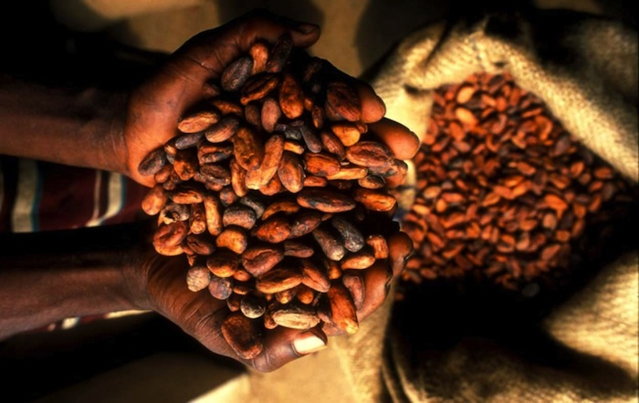 World Bank to invest US $300m in Ghana's Cocoa industry
