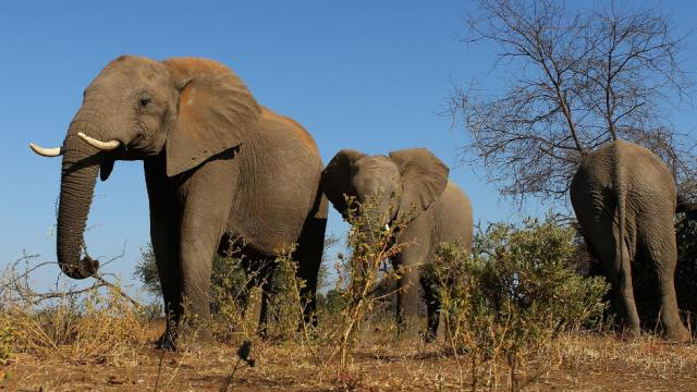 Questions remain over CITES vote which theoretically means zoos can no longer procure wild African elephants