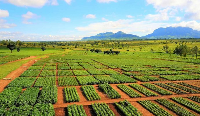 '$10bn to feed 10 billion by 2050', CABI tells AGRF