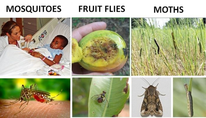 The Mega-Pests of Africa and Their Economic Effect