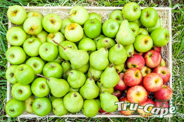 Expect 100 million bacterial cells per apple and most are really good for you!