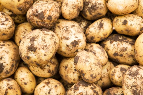 Tomra food introduces new sorting machine for potatoes