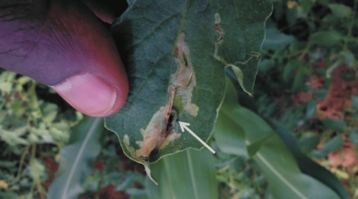 Growers and scientists call on president to prevent food catastrophe by upholding pest control law