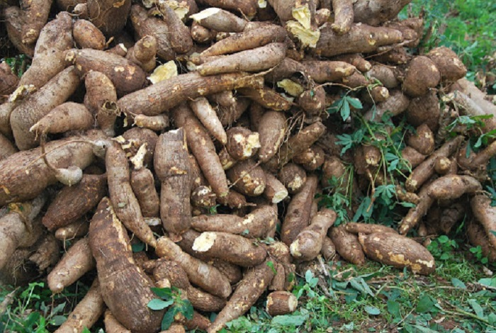 Liberia struggles to meet cassava shipping requirements, risk losing US $15m contract
