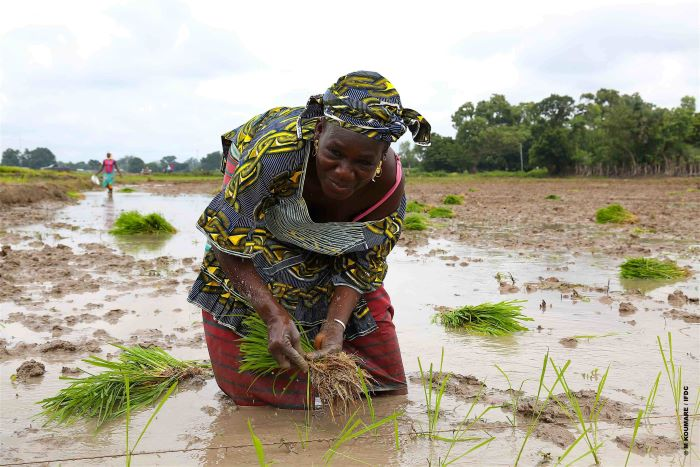 AfDB's TAAT program targets 40m farmers across Africa in the next five years