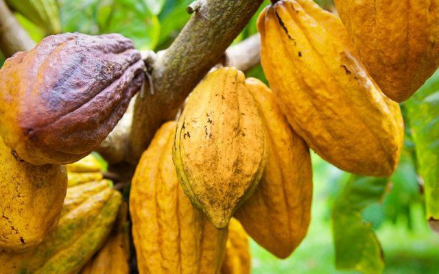 Ghana Cocoa Board, African Development Bank and financial partners celebrate first $200 million disbursement of loan to boost cocoa productivity in Ghana