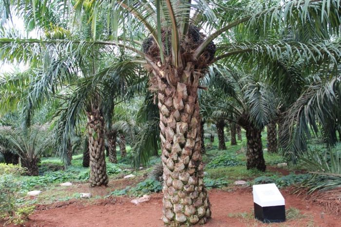 Njala University Sierra Leone signs US $191m MoU with AVDP for oil palm project