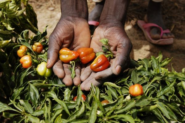 IFAD invests €77.7 million in Niger for food and nutrition security and climate change resilience