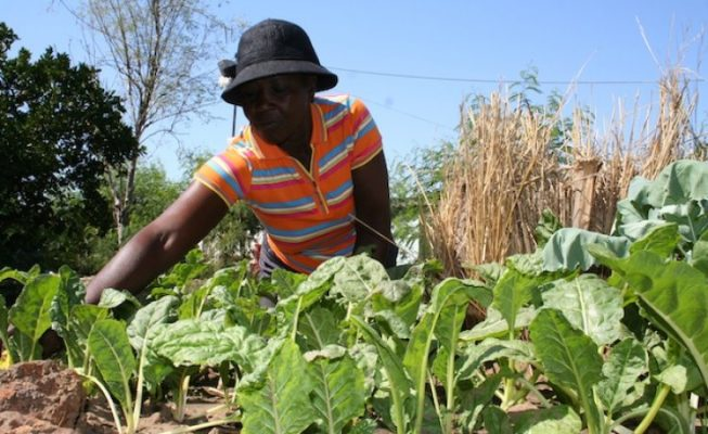 Angola and IFAD to promote sustainable agriculture and boost food security in the face of climate change