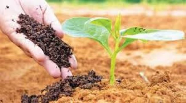 Organic Farming Market is expected to reach $129.97million by 2026 Says TMR