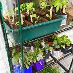 Quictent-Hot-4-tier-Mini-Portable-Green-Hot-Grow-Seeds-House-Indoor-Outdoor-wShelves-Greenhouse-0-0