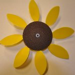 Full-Bloom-Spinning-Daisy-Sunflower-x6-case-0
