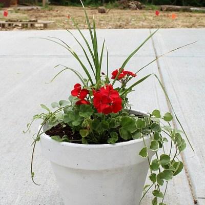 Potting Soil Saver Tip