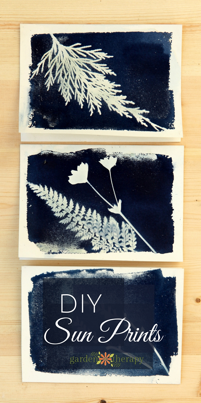 How-to-make-sun-prints