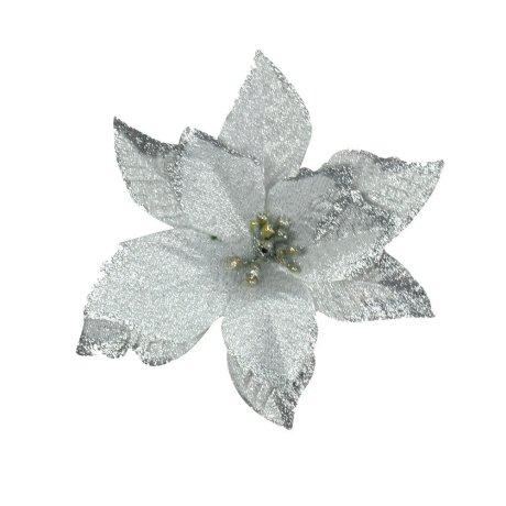 white-poinsetta