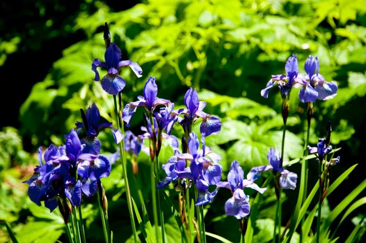 garden-flowers-for-summer
