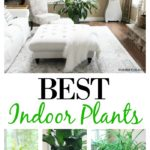 2 Of The Best Indoor Plants For Your Home