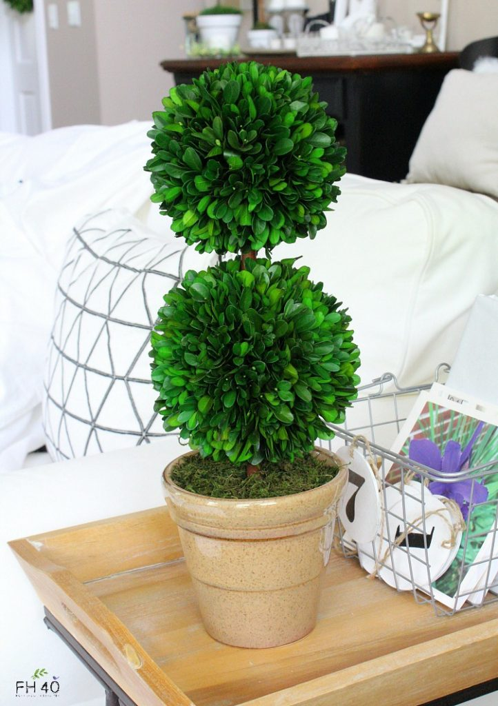 preserved-boxwood-topiary