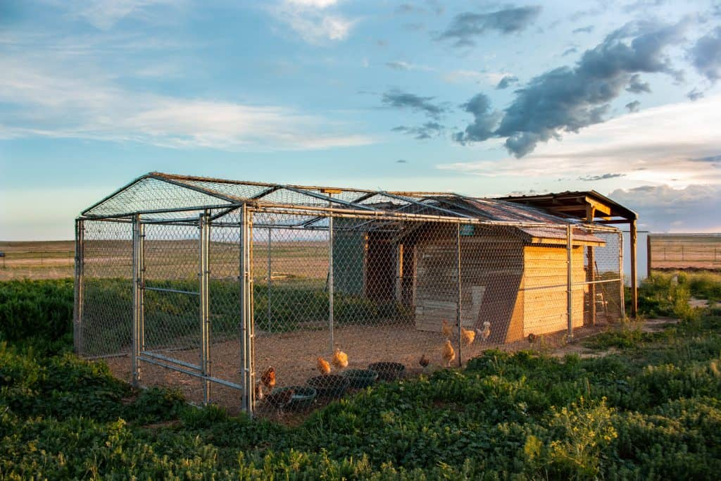7 Essentials For A Backyard Chicken Coop Farmhouse On Boone