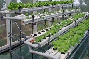 hydroponics system farming that works