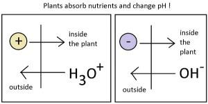 hydroponic pH balance