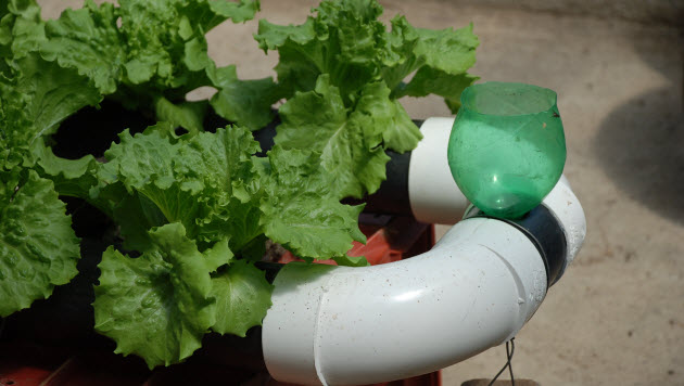 hydropinics from home