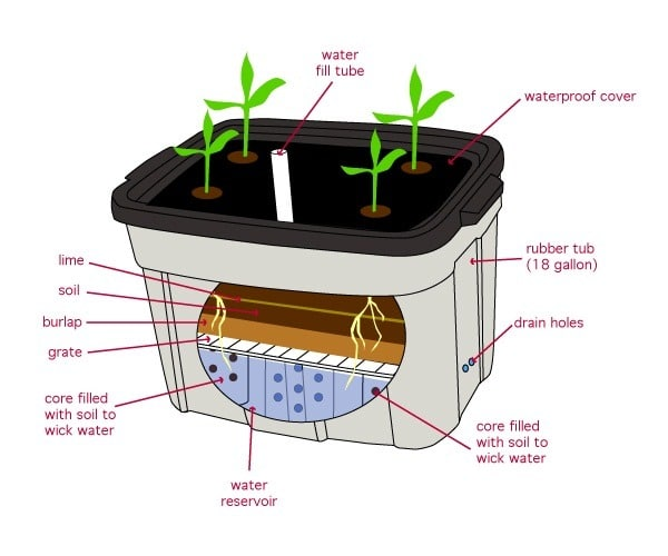 fed nutrient solution in a hydroponic grow system
