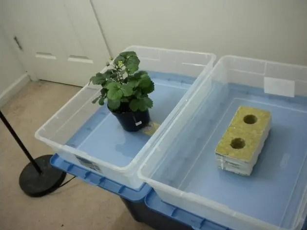 hydroponics starting seeds