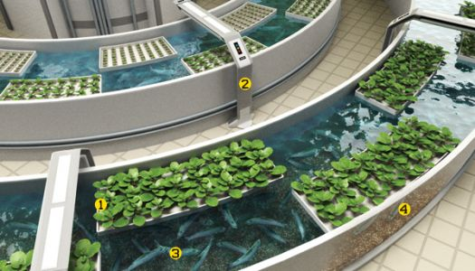 Indoor Hydroponic Garden kits That Guarantee Incredible Results