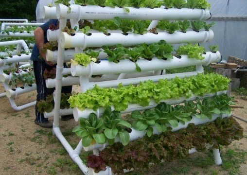 Hydroponic pvc pipe vertical gardening