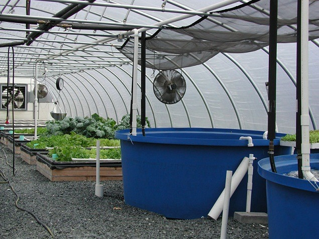 How To Set A Strong Aquaponic Greenhouse Design Full Guide