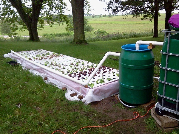 How to setup aquaponics system at home things to consider for Aquaponics pond design