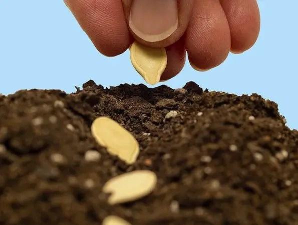 Soil Mixture starting seeds