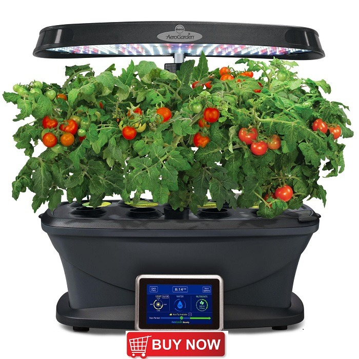 How To Grow Hydroponic Tomatoes For Best Results