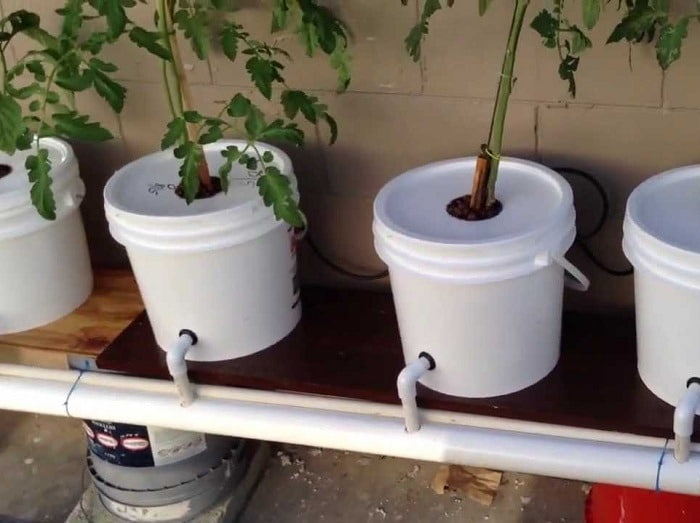 How To Setup Dutch Bucket System With Ease