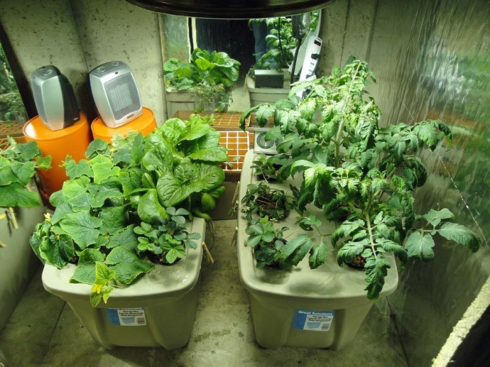 What Is Hydroponic Gardening – Best Practices