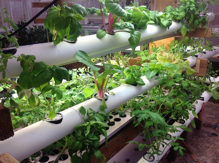 Is Using PVC Pipes Safe For Hydroponics?