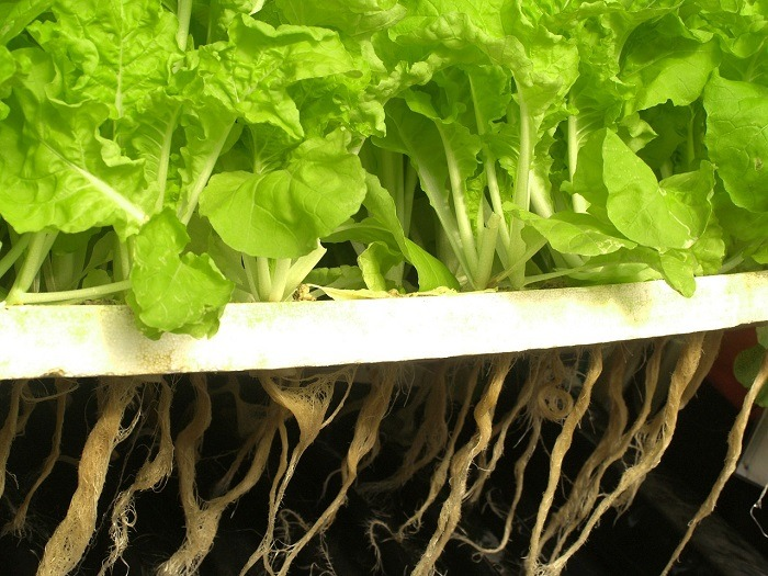 How Do You Build A Hydroponic Garden?