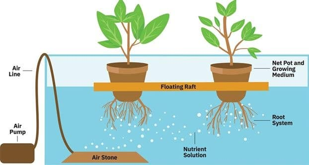 Types Of Deep Water Culture (DWC)