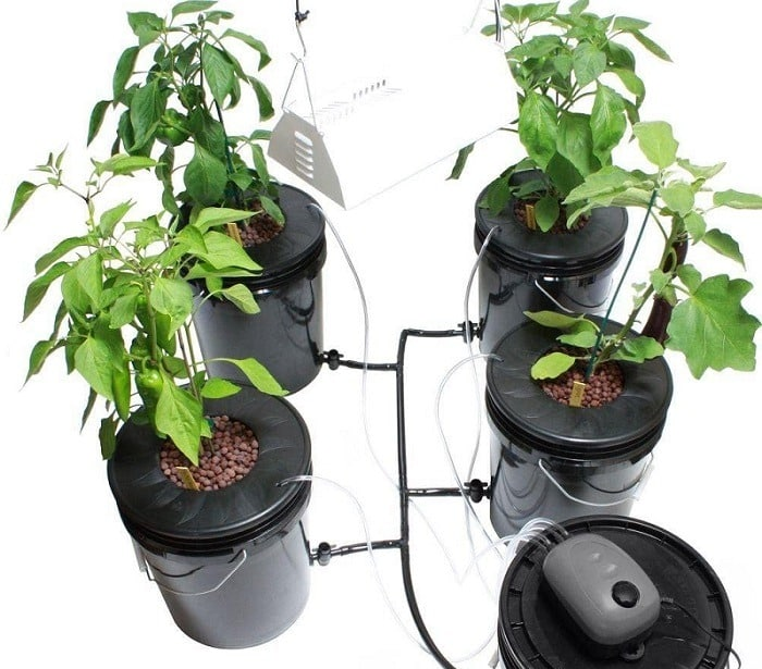 How Many DWC Buckets Are Needed In A 4×4 Tent?